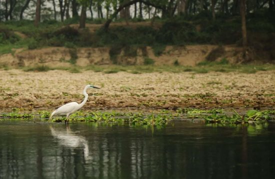 Chitwan Birdwatching Tour
